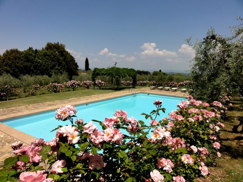 Olive in Villa castellare