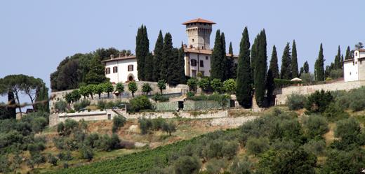 Olive in Vicchiomaggio